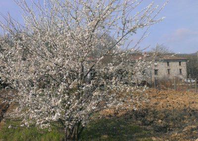 primavera-7
